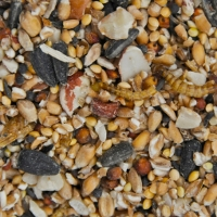 Blue Tit Insect And Mealworm Mix